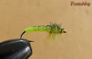 Caddis (6 of 6)