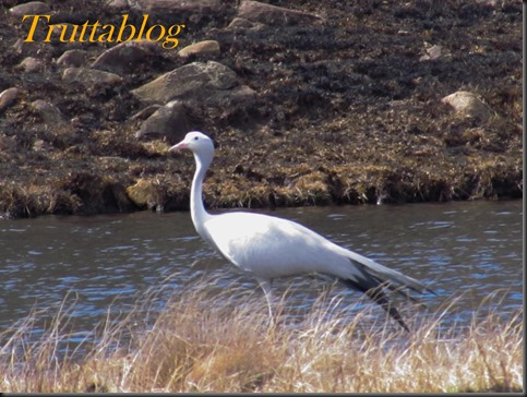 Cranes (4 of 7)