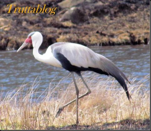 Cranes (5 of 7)