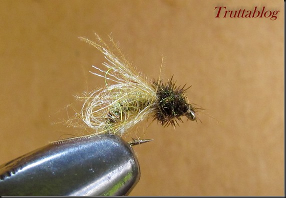 Caddis (2 of 6)