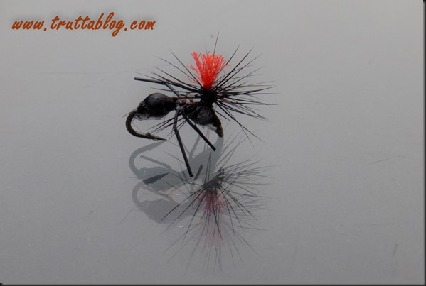Ant (1 of 1)