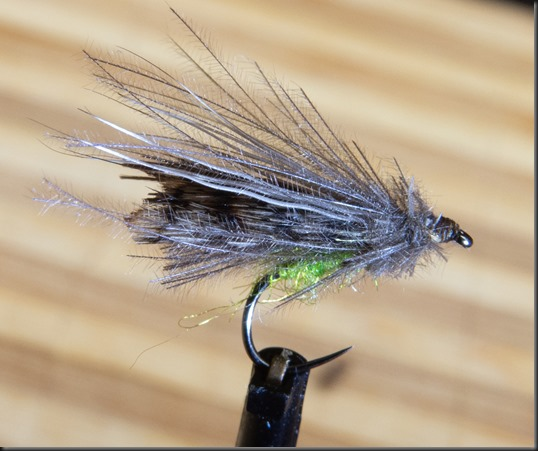 Adult Caddis-5
