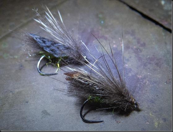 Adult caddisflies-5